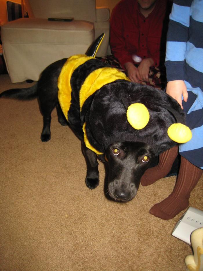Brownie Bee