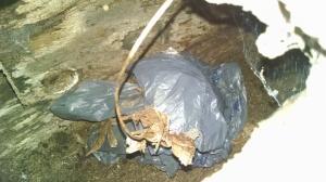 Opossum hole